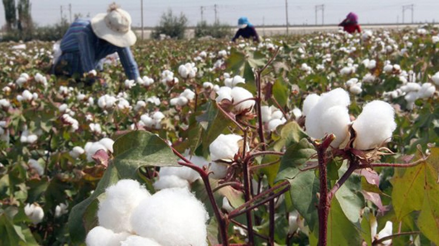 Assessment of the risks of forced labour during cotton harvest among the staff